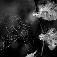 Spiders Hope by tholang