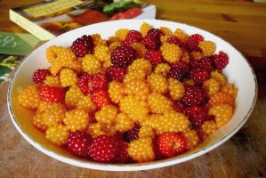 Salmon Berries In White Bowl by PamplemousseCeil