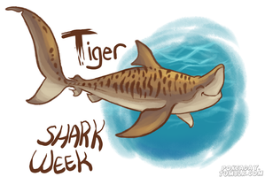 Tiger Shark by Pokeaday