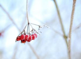 Icy berries by KB-Fotografie