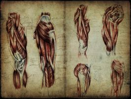 Anatomy University Workbook 8 by Sgrum