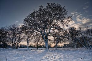 A Winters Tale 197-10j by Haywood-Photography