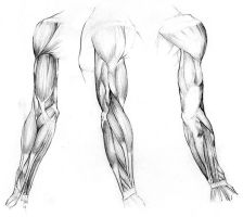 Study of Arm Muscles by Kaliptus