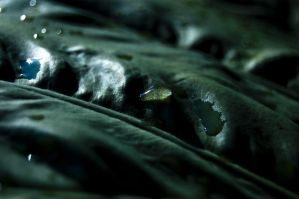 Water on Leaf by 3hanphoto