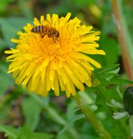 Bee by haker274