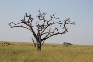 Dead Tree 01 by syoul-stock