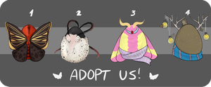 [CLOSED] Moth (humanoid) Collab Adopts by strxbe
