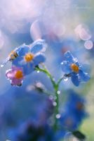 forget-me-nots6... by TheRedGirl