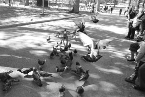 Pigeon Social In the Park 4 by Miss-Tbones
