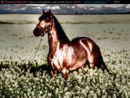 Caballo by powerspiders