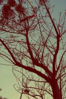 Branch of pain by Einas-A
