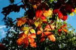Autumn's Arrived at Last by EarthHart