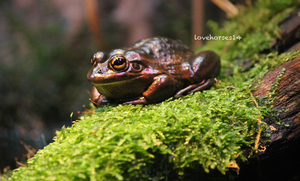 frog on a log by lovehorses14