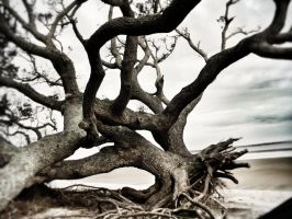 UpRooted by denehy