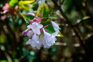 White Flowers by Bazz-photography