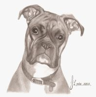 Boxer dog by JodieLeader