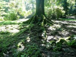 Never ending roots by bhakri
