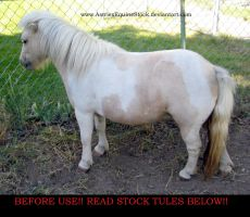 Equine Stock 23 Little Sister by AstriexEquineStock