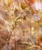 bokeh in the grass by SvitakovaEva