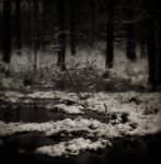 Frozen Wood by IMAGENES-IMPERFECTAS