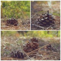 Pine Cones by uwarrior