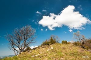 nuage et buissons by rdalpes