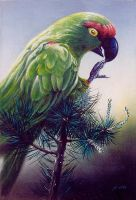 Parrot by Stungeon