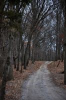 Wooded Dirt Road 3 by FairieGoodMother