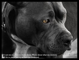 Dont mess with mommys pit bull by brittneykd