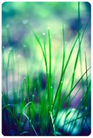 grass by ailenn