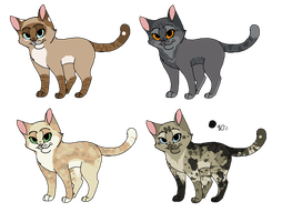 Adopts of cats  by MlSTY