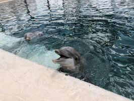 Happy Dolphin by Wolfchick36