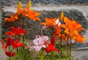 Lilies by forgottenson1