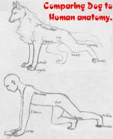 Dog anatomy help by luperus