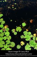 Lily Pad Stock by Cassy-Blue