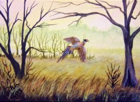 ACEO Pheasant in Flight by annieoakley64