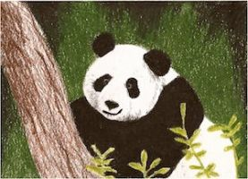 Day 13: Giant Panda ACEO by whitetippedwaves