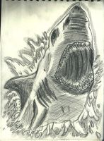 Shark Sketch by flaviudraghis