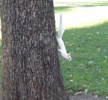 white squirrel by loghry