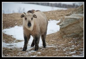 Vulnerability by tleach0608