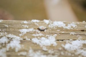 Deck and Snow 9 by Jessica-AuBuchon