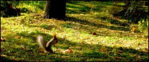 Squirrel by Kanashii-Hito
