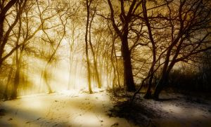 Shadows on Snow and Smog by borda