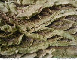 Tree Bark 61_quaddles by quaddles