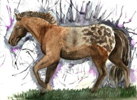 Appaloosa Paint by Blackwolfoffireworks
