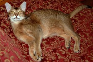 Foxy Cat in bed by Soniafm1027
