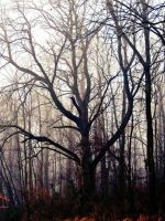 Tree In The Fog by TemariAtaje