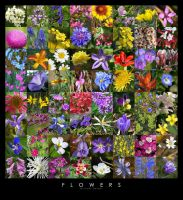 Collage of Flowers by yenom