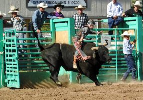 Bull Busting Stock 17 by Rejects-Stock