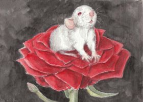 The Rose Rat by theillustratedrat